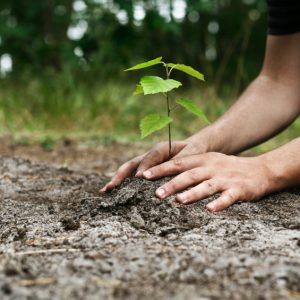 Planting a tree - JFC sustainability